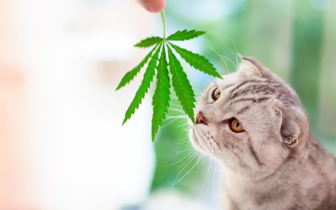 CBD for Pets: How Does it Work?
